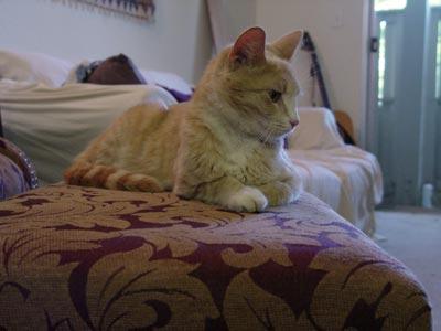 Cat on throne.