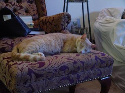 Cat sleeping on ottoman.